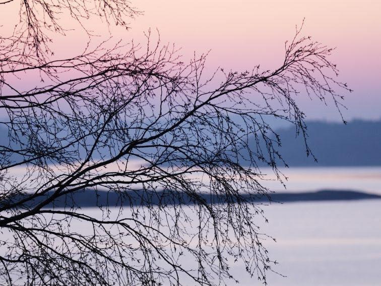 A tree by the water, Sweden. shutterstock_107428517